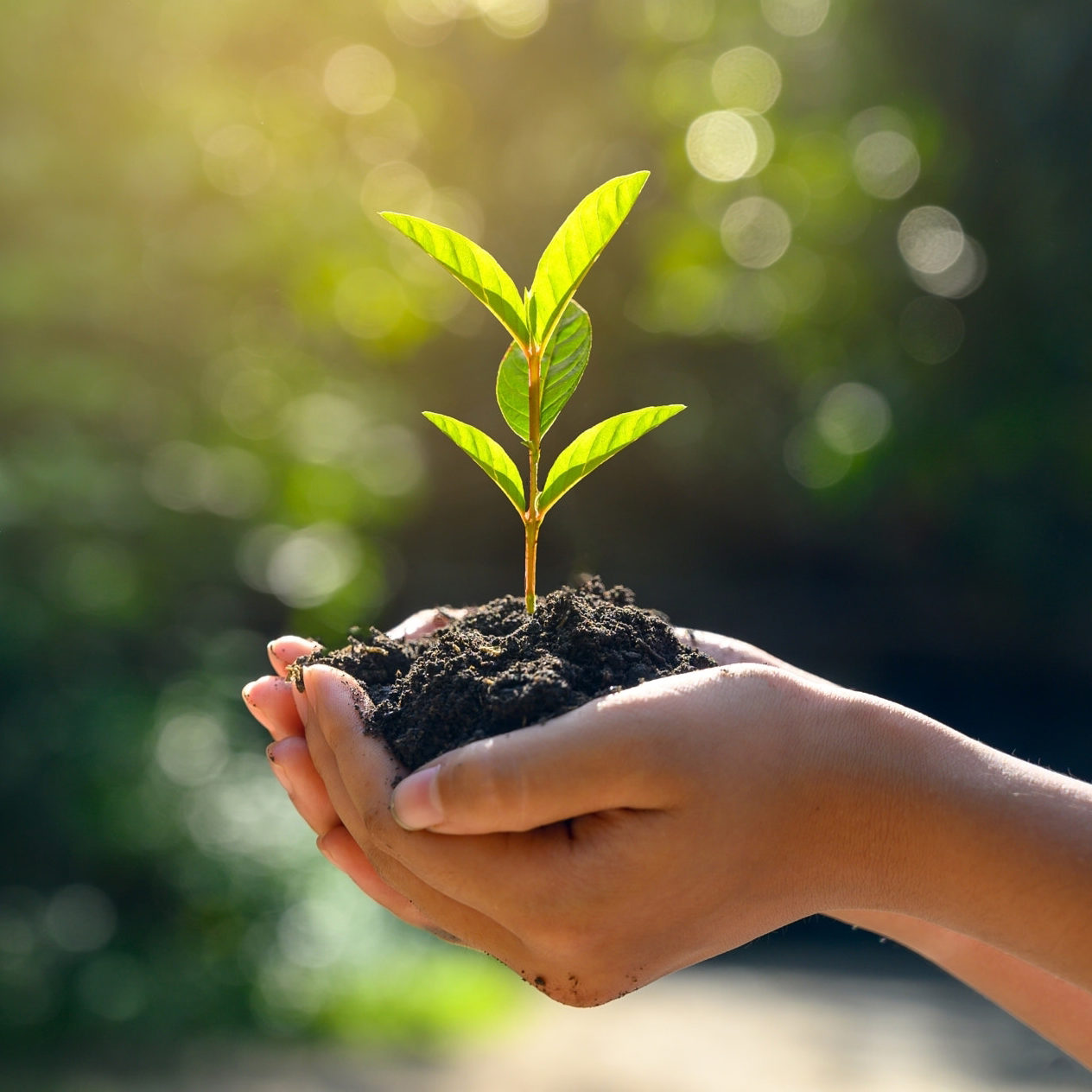 Tree Planting. holding small green tree plant on soil, trees growing seedlings. holding tree on nature grass field. earth day, save environment.